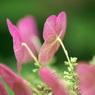 SONY DSLR-A100で撮影した植物(右・・・習え)の写真(画像)