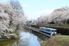 花見列車-2017