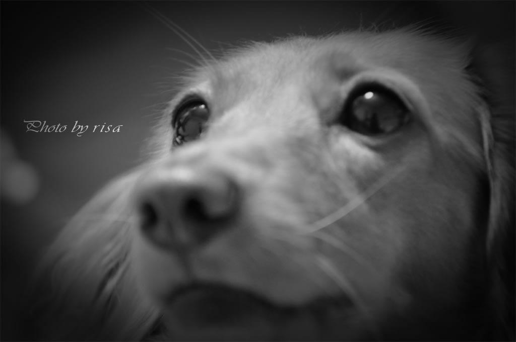 愛犬『きょろ』