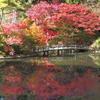 『長谷池の紅葉』
