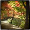 『Autumn 4』