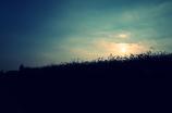 『夕焼けと秋桜』