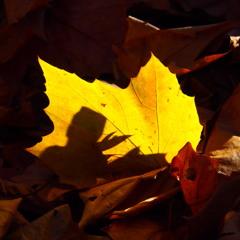 『影絵の葉』