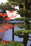『圓光寺の秋』