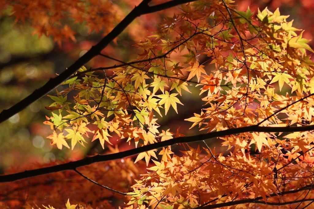 神戸市立森林植物園7