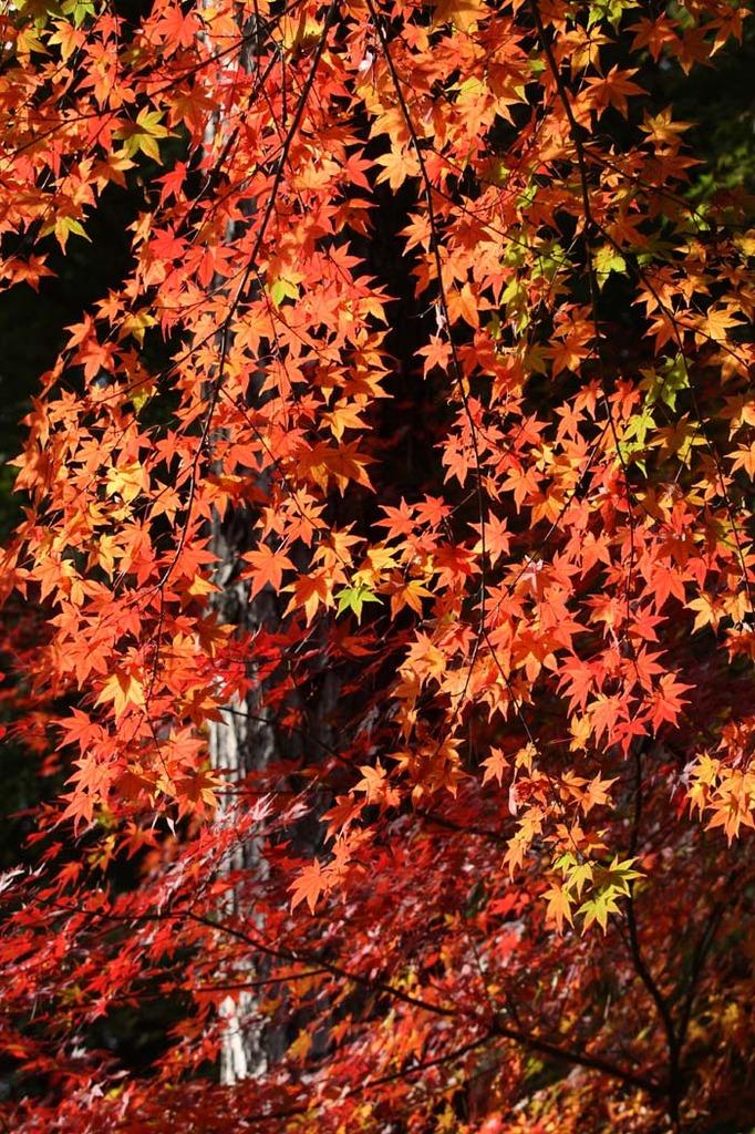 神戸市立森林植物園8