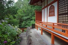 『久米寺の紫陽花』