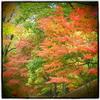 『Autumn 5』