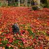 『紅葉じゅうたんの中で』