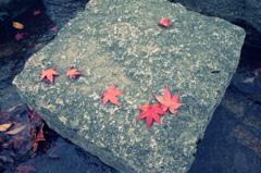 『紅い紅葉』