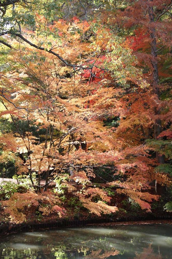神戸市立森林植物園4