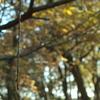 折れかかった枝