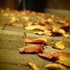 夜の落ち葉