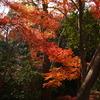 川越 喜多院の紅葉 2008