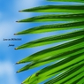 PENTAX PENTAX K-7で撮影した植物(南国色)の写真(画像)
