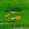 PENTAX PENTAX K-7で撮影した植物(雨後)の写真(画像)