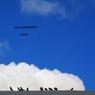 PENTAX PENTAX K-7で撮影した動物(雲の住民)の写真(画像)