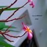 PENTAX PENTAX K-7で撮影した植物(本物)の写真(画像)