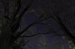 夜の空の青さが光る