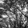 NIKON FM2で撮影した植物(代々木公園)の写真(画像)