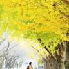 2人で歩く秋の道