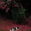 山茶花の木の下で