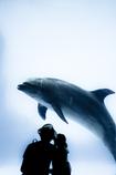 イルカと親子
