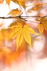 黄楓の優しさⅡ