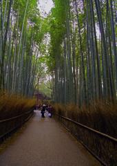 癒しの竹林の道