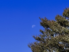 うっすら月
