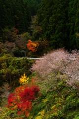 冬桜と紅葉の里