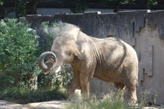 ゾウの砂浴び