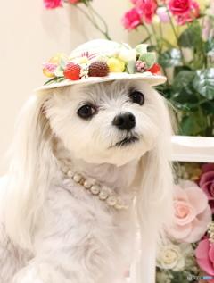 ベリーの帽子