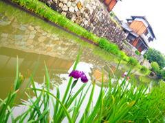 雨上がりの近江八幡