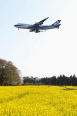 日本貨物航空 菜の花と