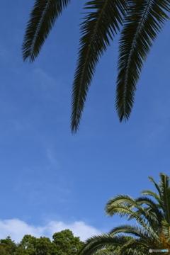 暑い日に空を見上げて・・・