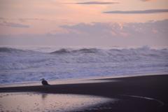 暮れる海岸