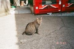 自販機と猫