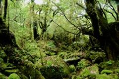雨の中の苔むす森