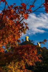 奈良の紅葉(その1)