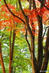秋色その3