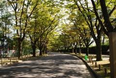 木洩れ日の道 2