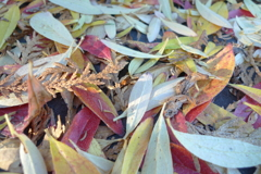 落ち葉いっぱい!