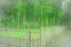 竹林  1