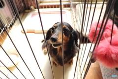愛犬ミルキー