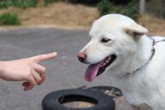 飼い主と遊ぶ犬のシロ