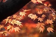 晩秋の光に照らされて