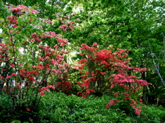 森の中のパステルカラー