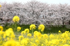 やんわりと春