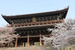 知恩院三門と桜